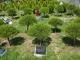 수목장 #3